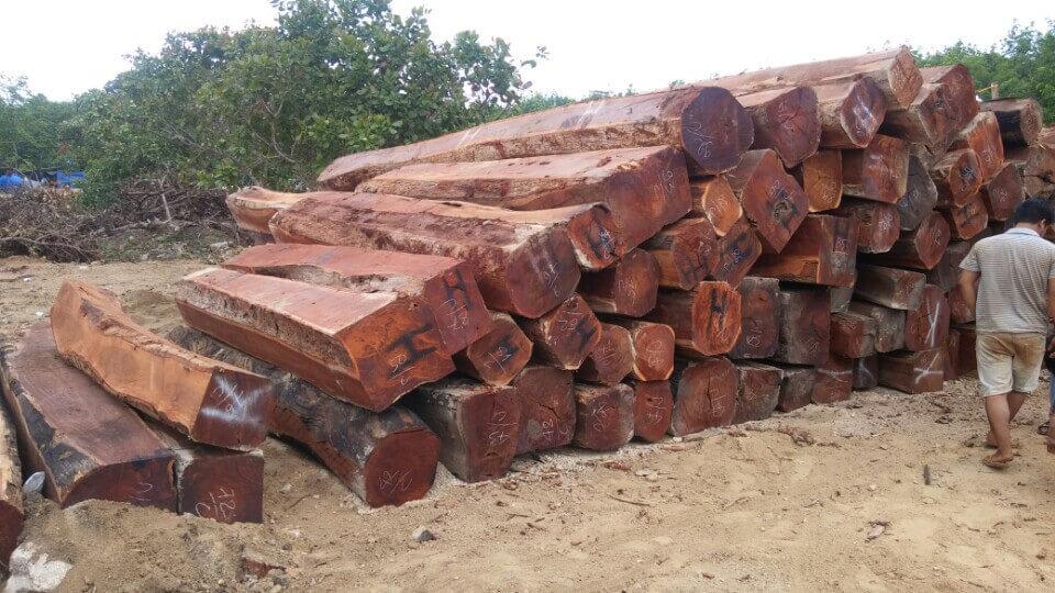 gỗ căm xe là gì