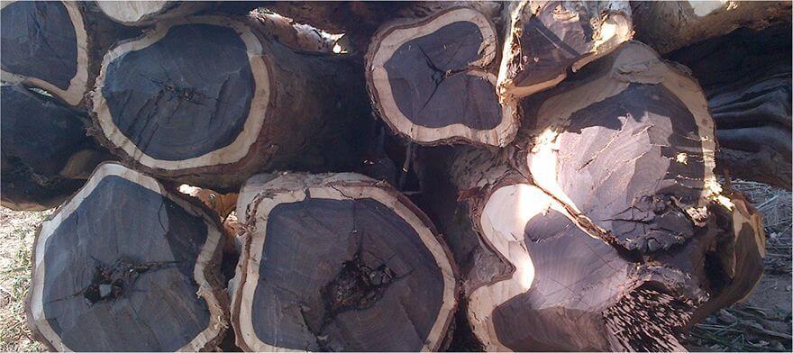 gỗ mun là gì