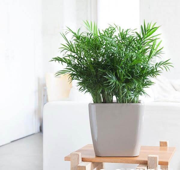 cây trồng thanh lọc không khí