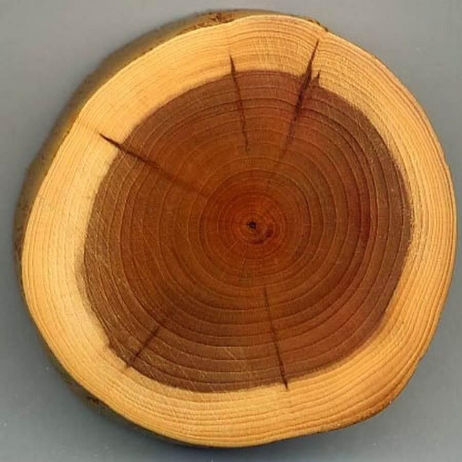 gỗ gụ là gì