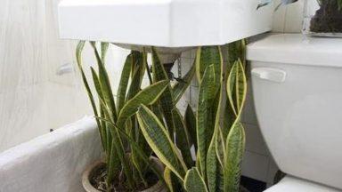 Những cây trồng tốt nhất để khử mùi, đuổi muỗi cho phòng tắm