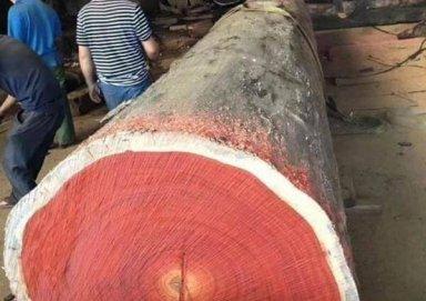 Tìm hiểu về gỗ hương là gì? Các đặc tính và cách nhận biết gỗ hương