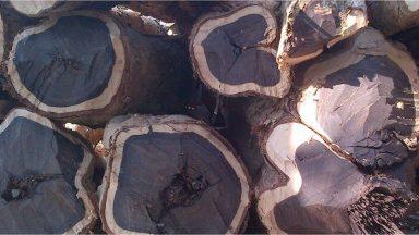 Tìm hiểu gỗ mun là gì? Gỗ mun có tốt không?