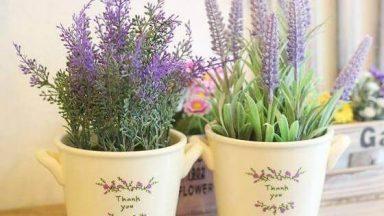 6 loại cây nên trồng trong phòng ngủ